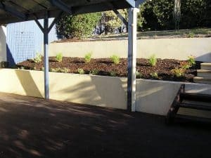 Calary Gardens Tidying and planting