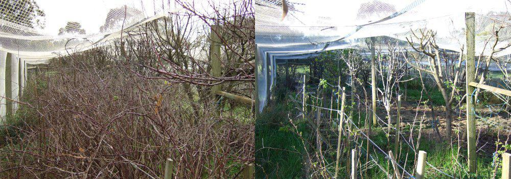 Garden Maintenance Mount Gambier Before and After