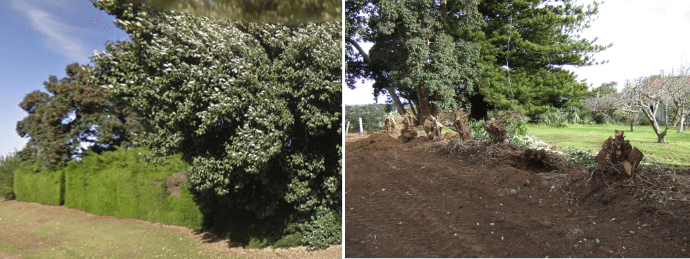 outside mt gambier hedge to be replaced