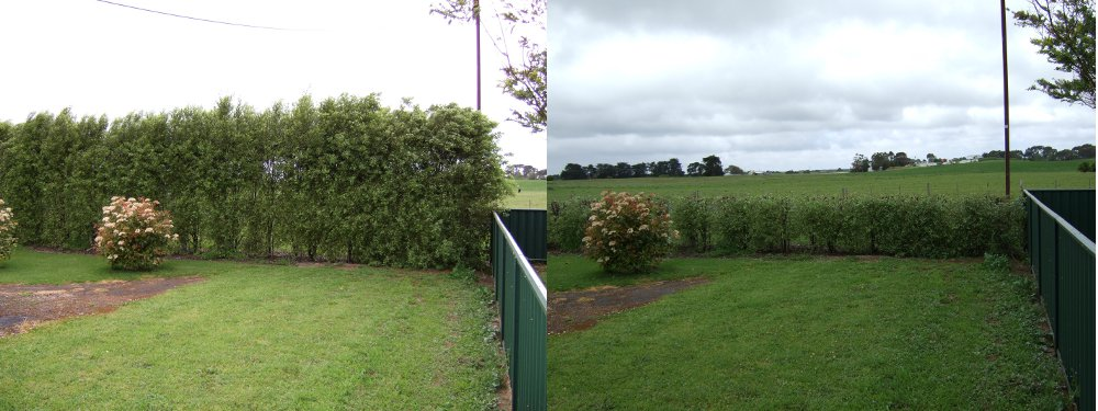 Before and after hedge cutting just outside Mt Gambier